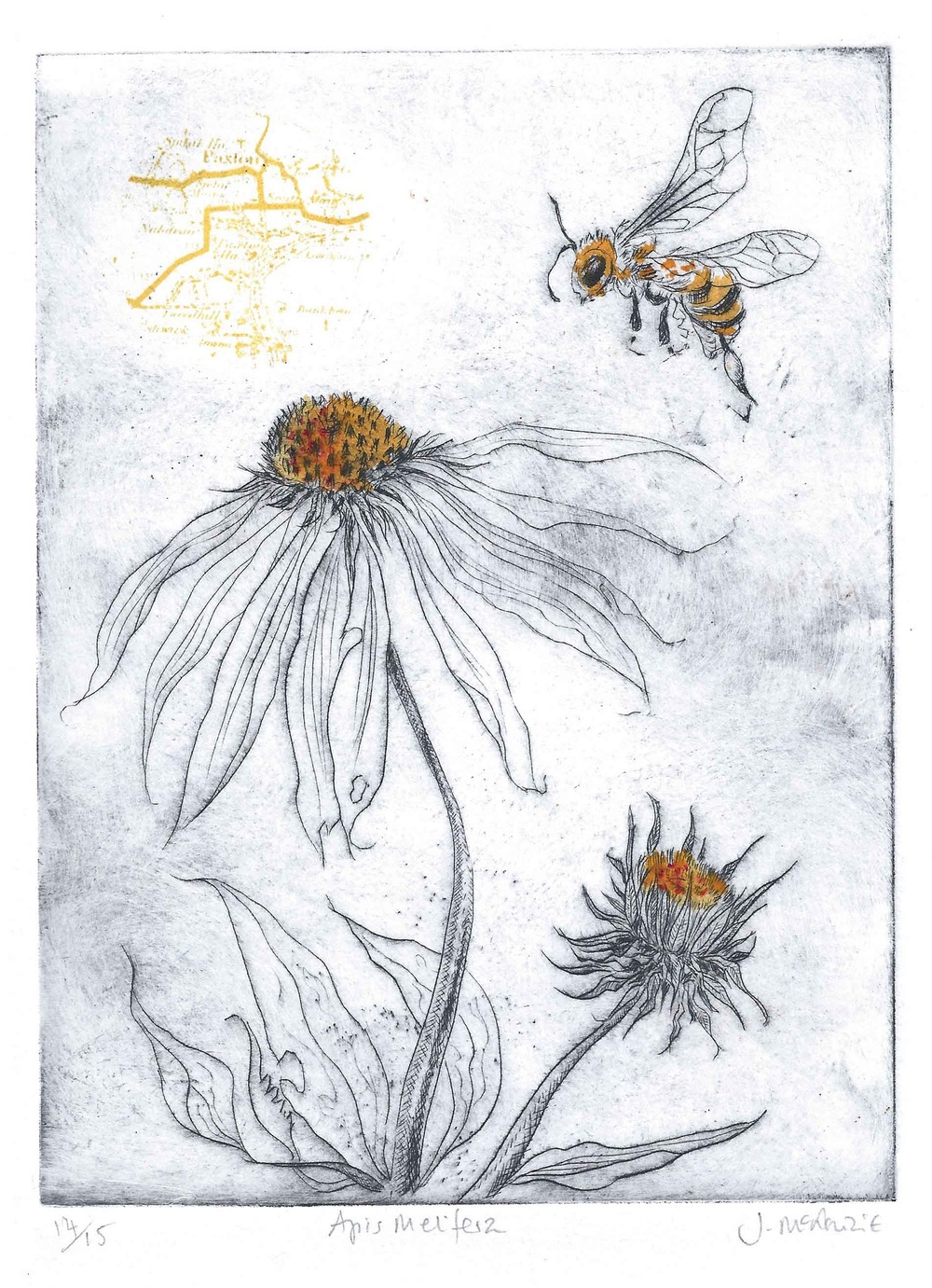 Apis Mellifera drypoint, screenprint and ink