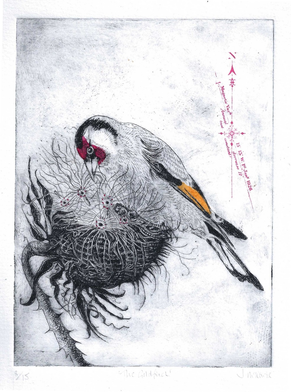 Goldfinch drypoint, screenprint and ink