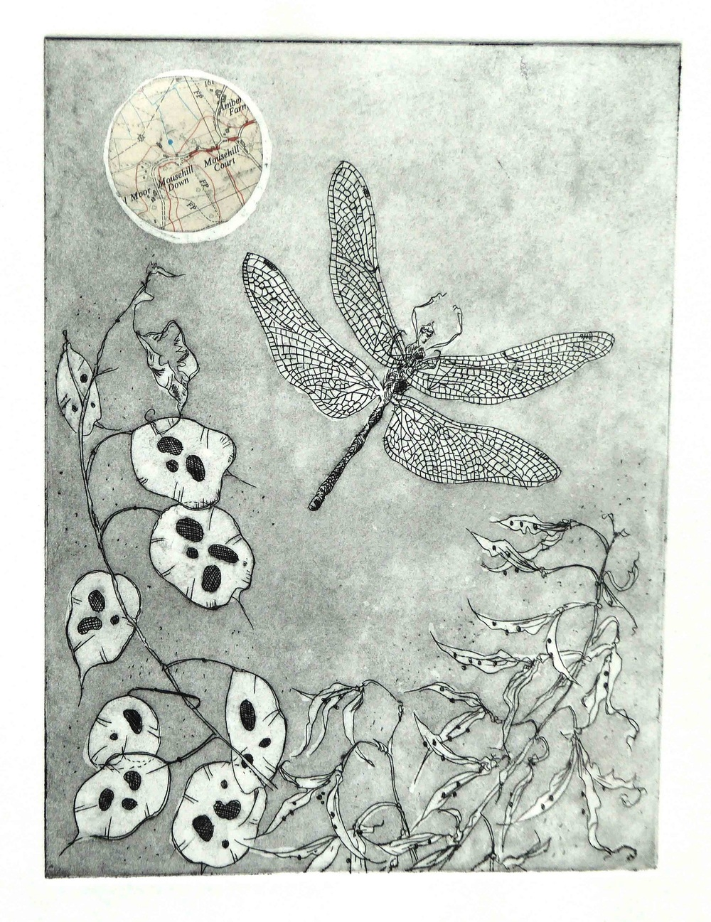 Honesty and Dragonfly etching with chine colle