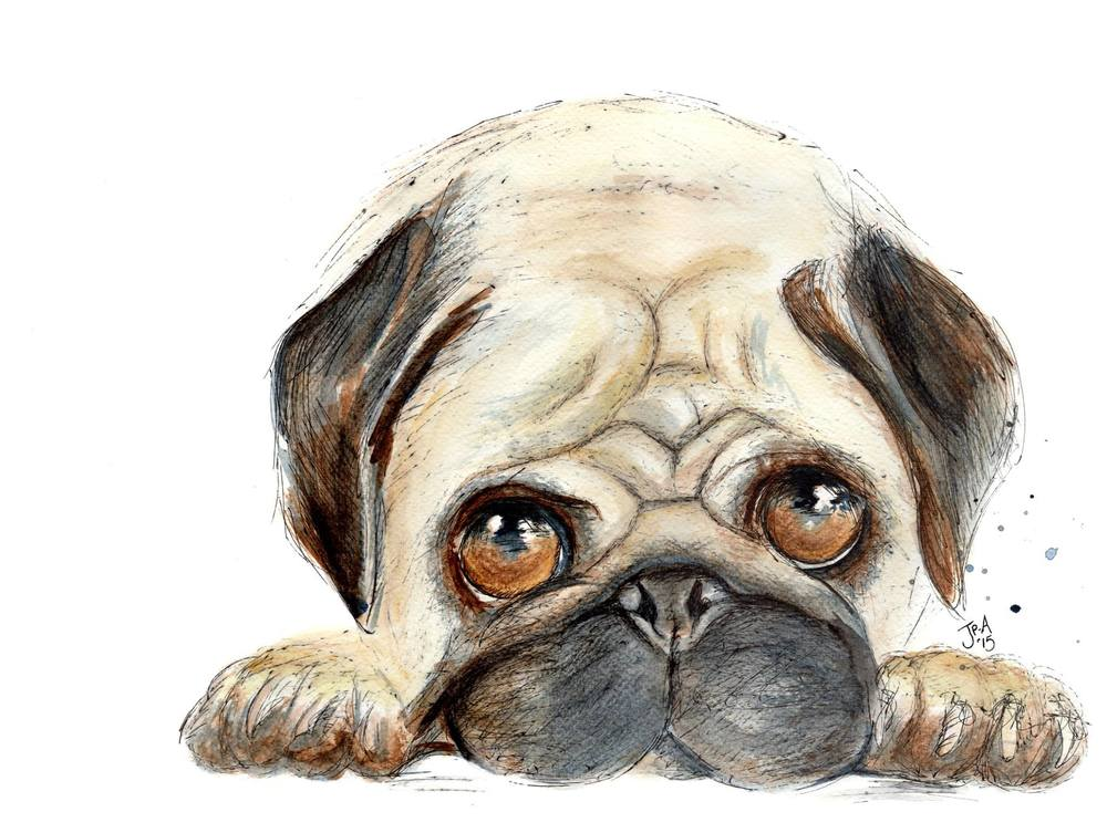 Can't Kick My Pug Addiction   watercolour & ink    £285