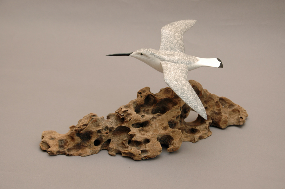 Curlew Sandpiper in Flight  wood & acrylic  £275