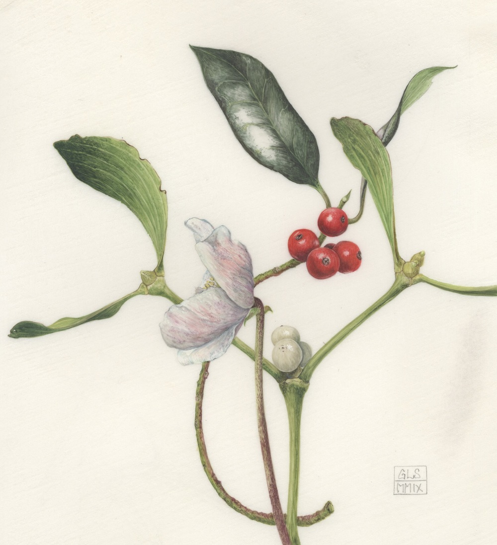 Christmas Rose, Mistletoe and Holly  watercolour on kelmscott vellum  14.5 x 15.5 cm  SOLD