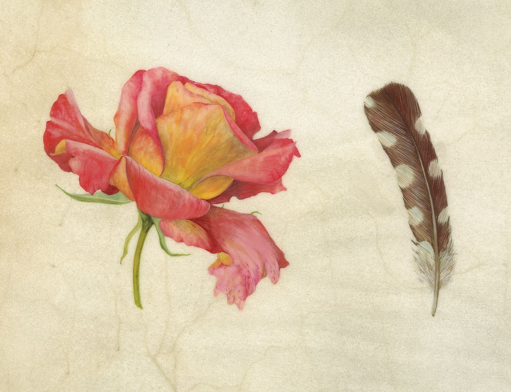 The Rose and the Woodpecker  watercolour on calfskin  21.5 x 12.5 cm  £720 (framed)