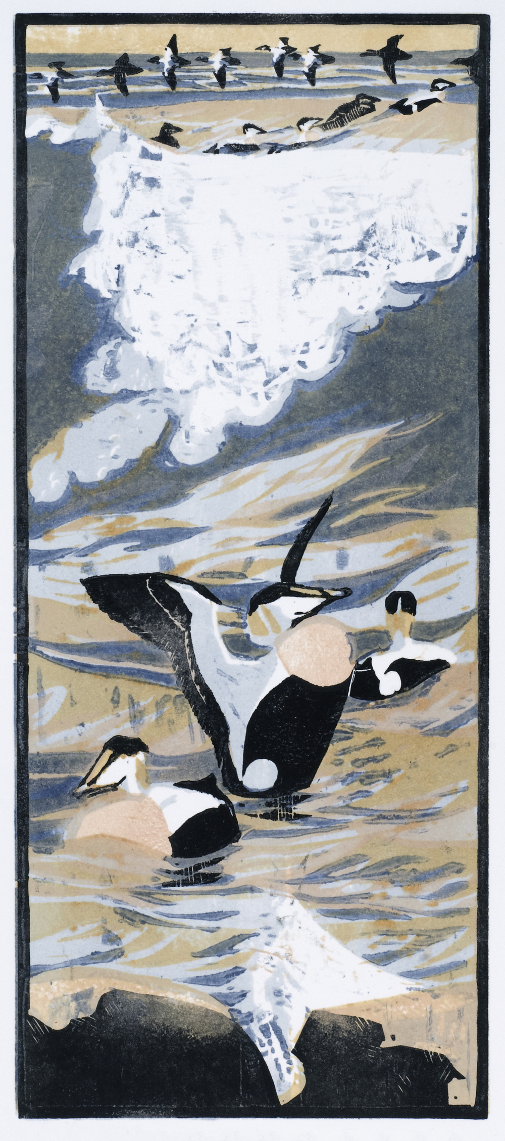 Eiders   woodcut   16 x 39 cm   £95 (unframed)