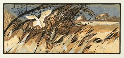 Robert Greenhalf   Barn Owl  woodcut  £95
