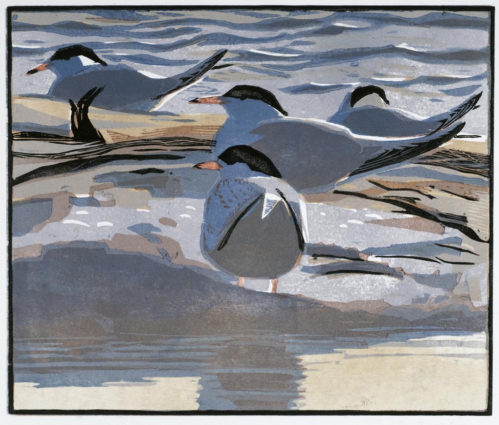 Robert Greenhalf   Common Terns  woodcut  £160 framed