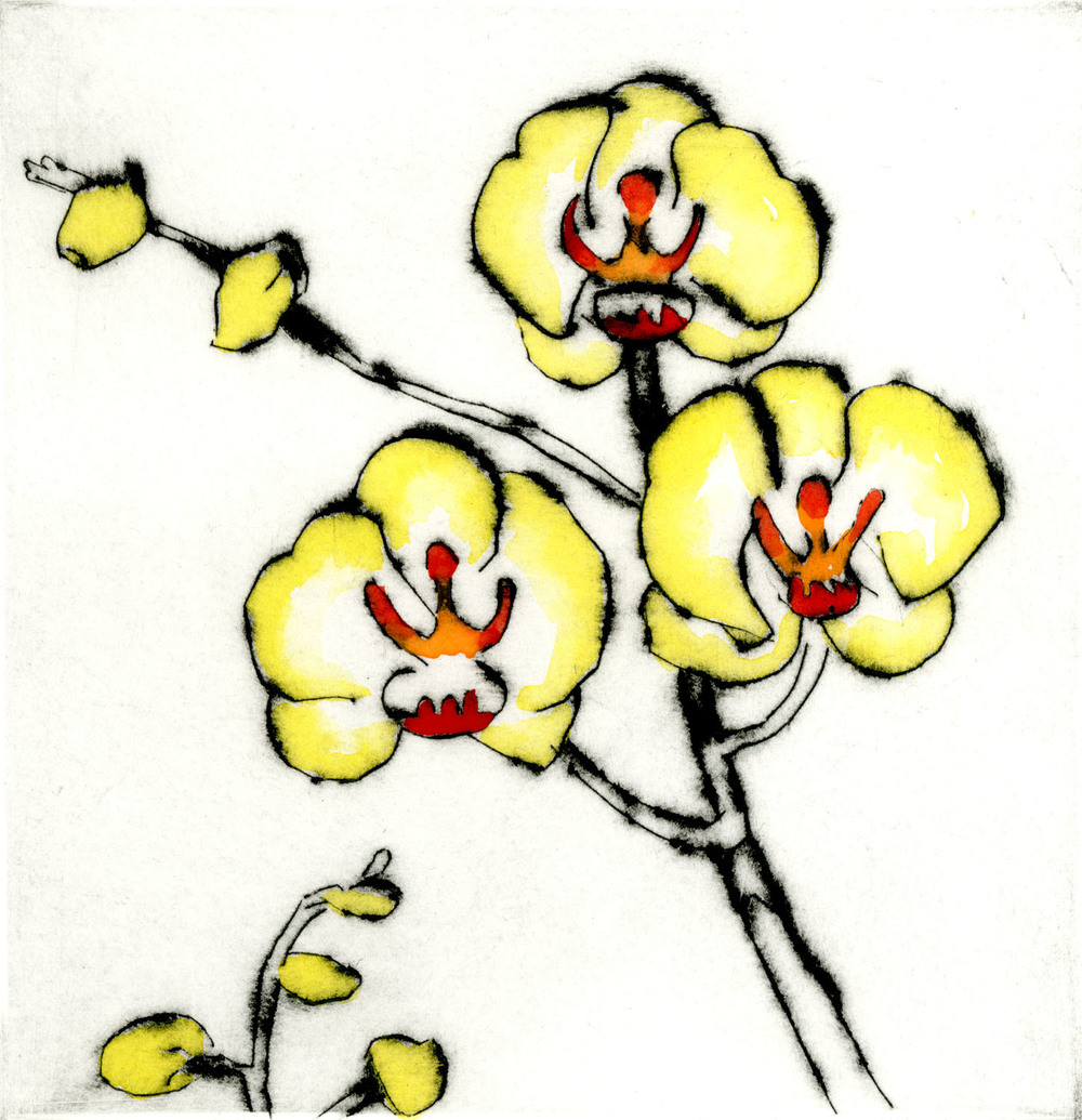 Lemon Orchid drypoint & watercolour 15 x 15 cm £220 framed £150 unframed