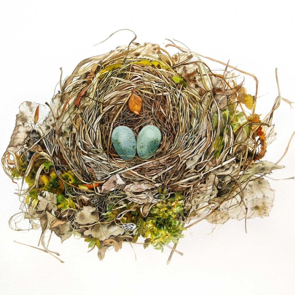 Nest with Moss watercolour 38 x 38 cm £550