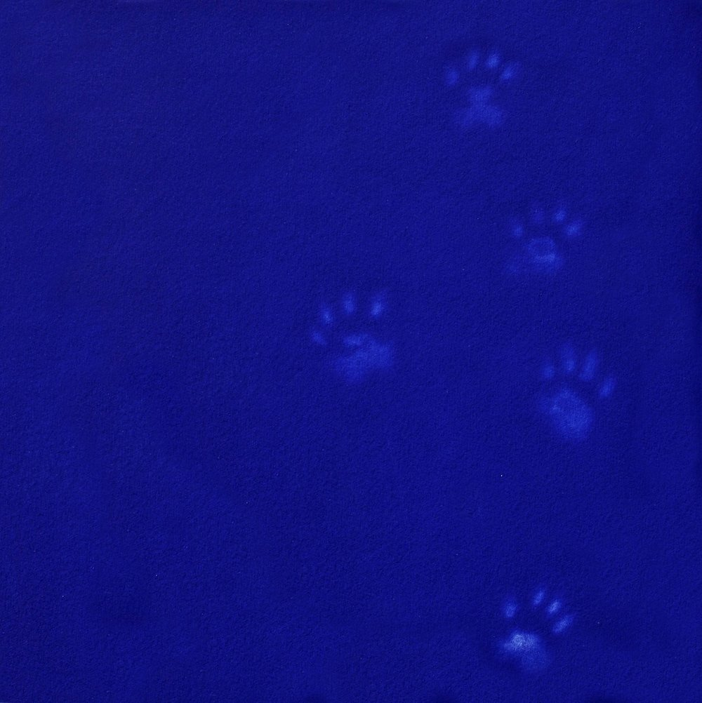 Yves Klein's Cat (rare)   mezzotint   47 x 45 cm  This print is now  SOLD OUT