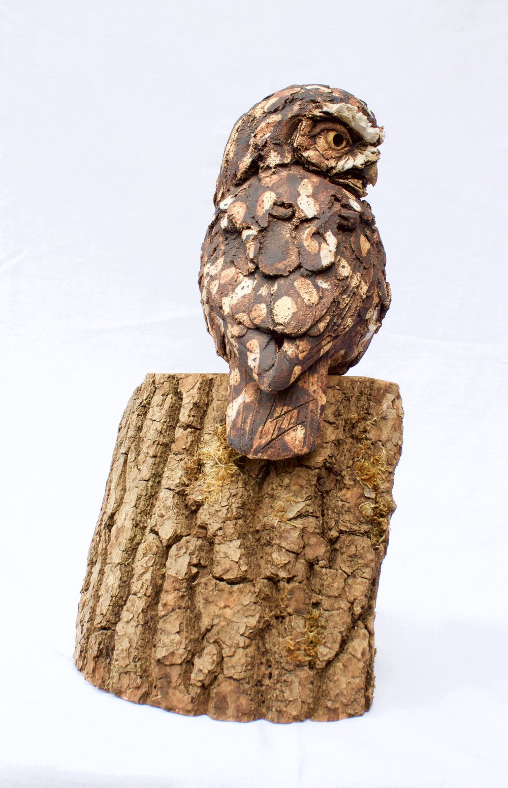 Little Owl  ceramic on wood  £440  SOLD