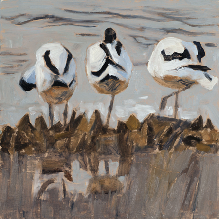Three Avocets   oil  24x24  framed £450