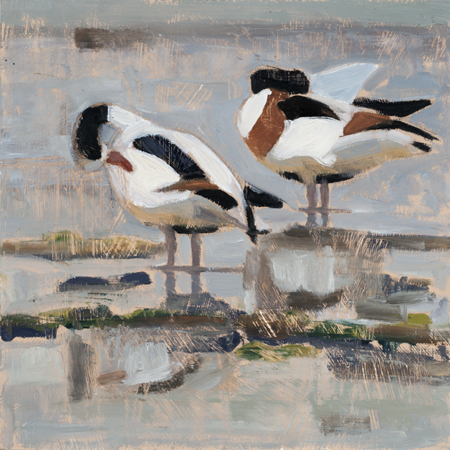 Two Shelducks oil 24x24 400