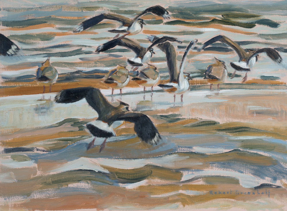 Lapwings flying in      oil                 32cmx44cm                   SOLD