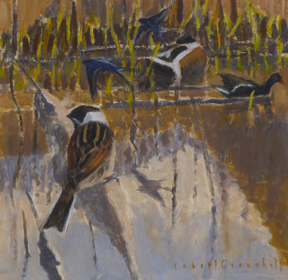 Reed Bunting, Moorhen, Swallows oil 24cmx24cm £450