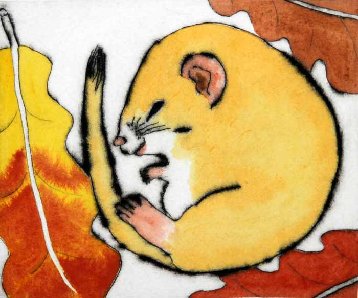 Dreaming dormouse  drypoint and watercolour 12.5 x 15 cm £199 unframed