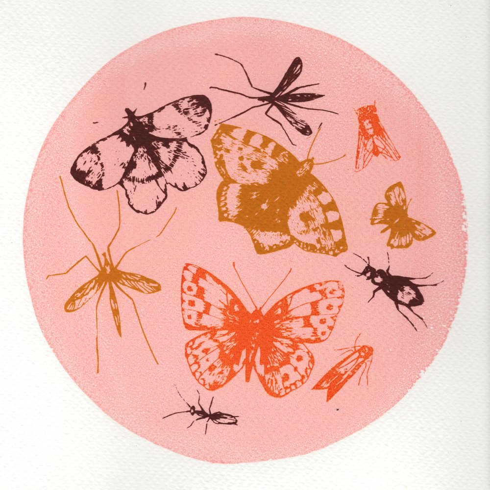 Butterflies and Bugs    screenprint    28cm x 28cm    £28 (unframed)