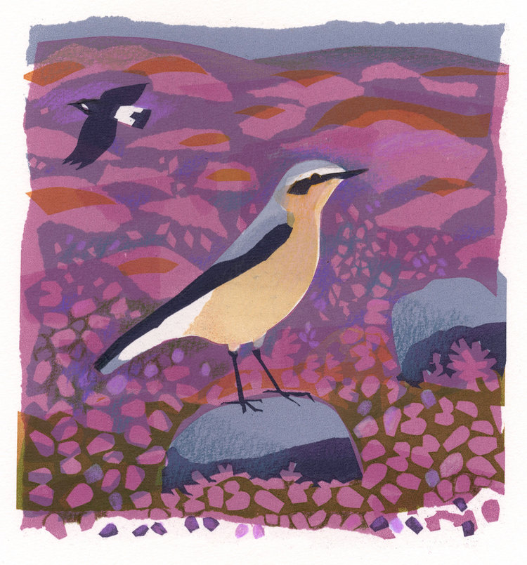 Carry Akroyd Wheatear serigraph 30 x 30 cm £280 framed, £210 unframed