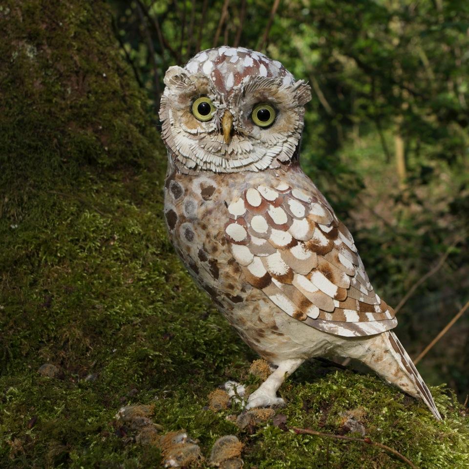 Little Owl mixed media 27 cm x 18 cm £300