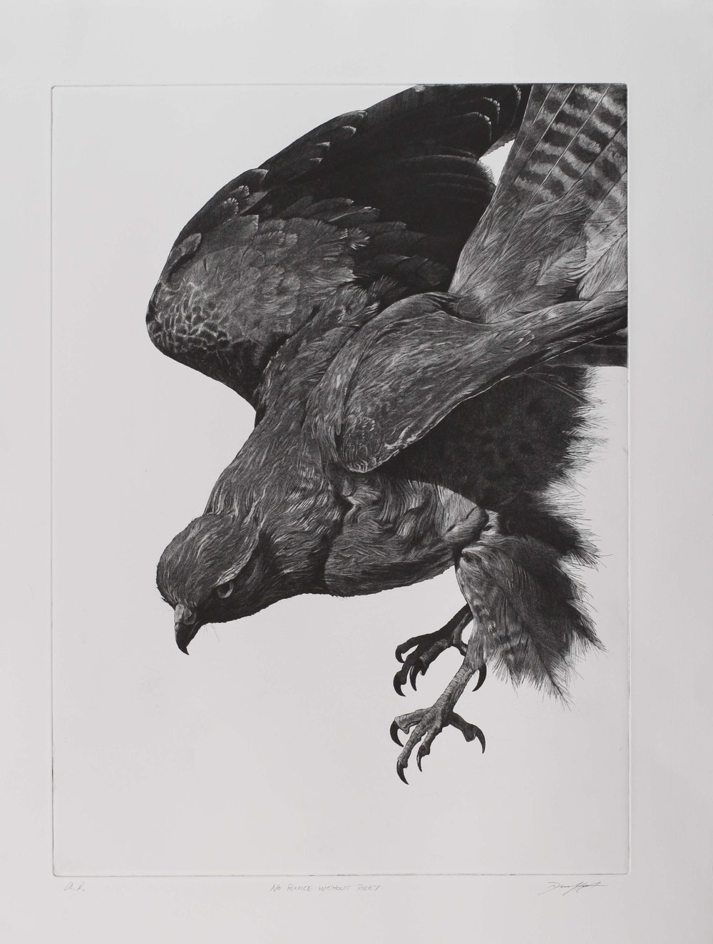 No Pounce Without Prey  etching and aquatint  Unframed £500 Size 60 cm x 43.75 cm  Framed £590 Size 80 cm x 63.75 cm