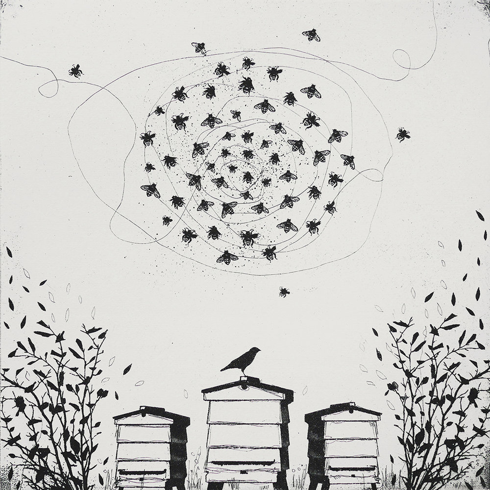 The Waggle Dance   etching   38 x 38 cm  £220 (unframed)
