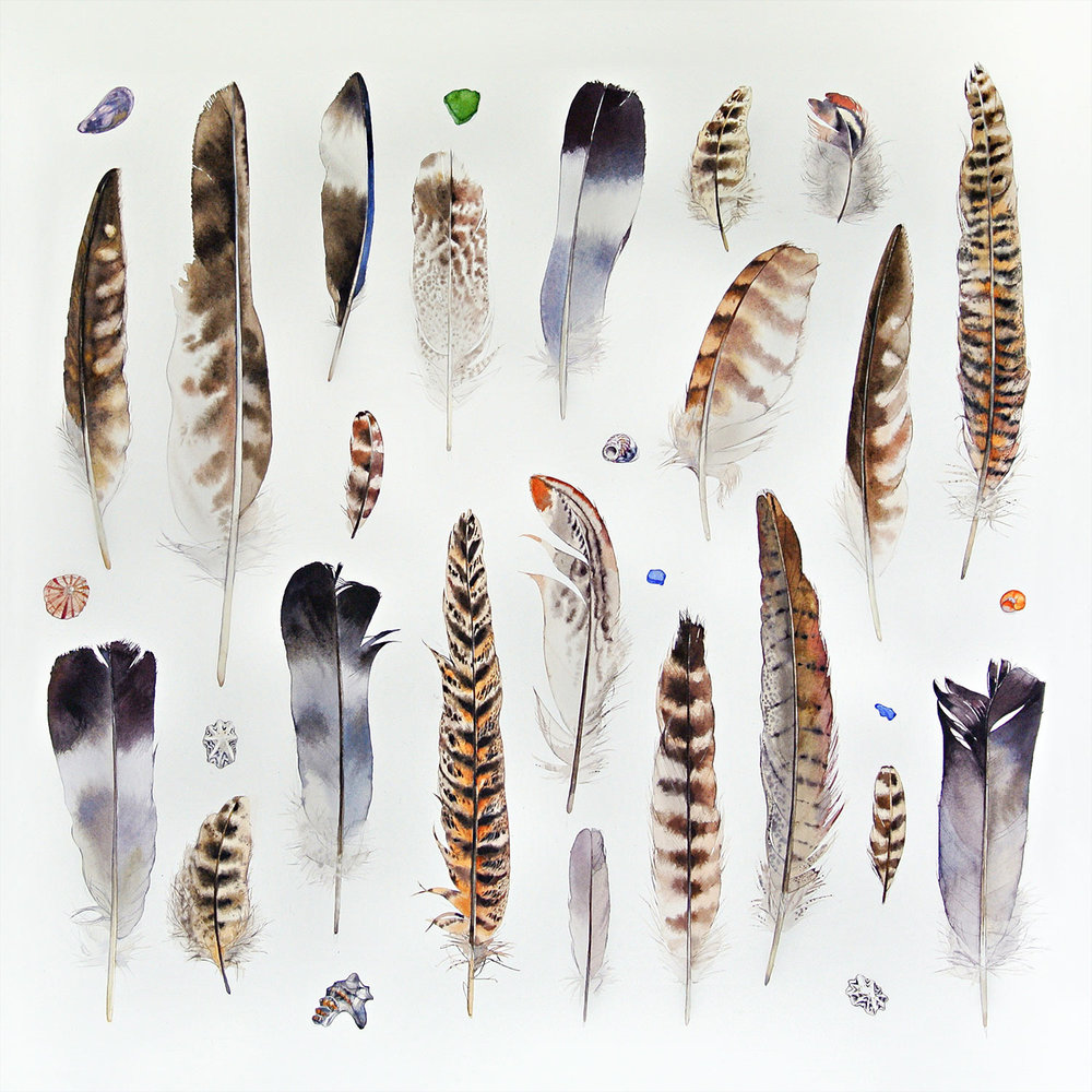 Feathers and Shells  watercolour    SOLD