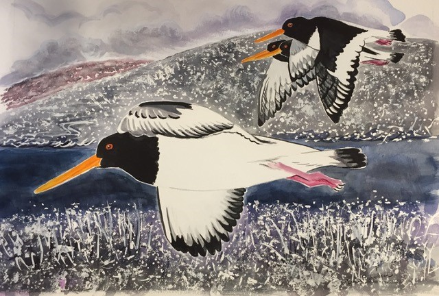 Oystercatchers at Voe, Shetland  Watercolour  £425