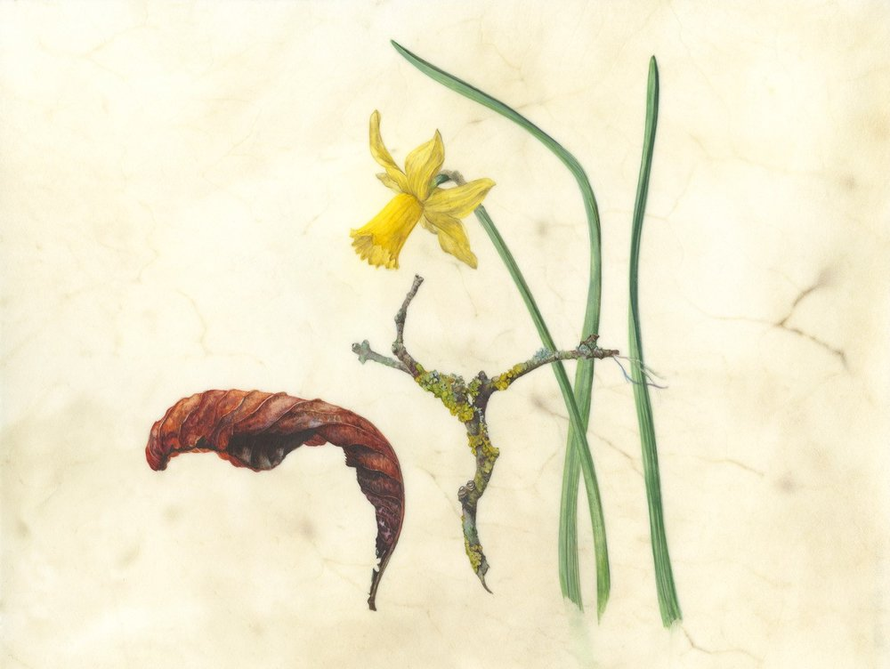 Spring finds  watercolour on natural calfskin  Image 24x17cm  SOLD