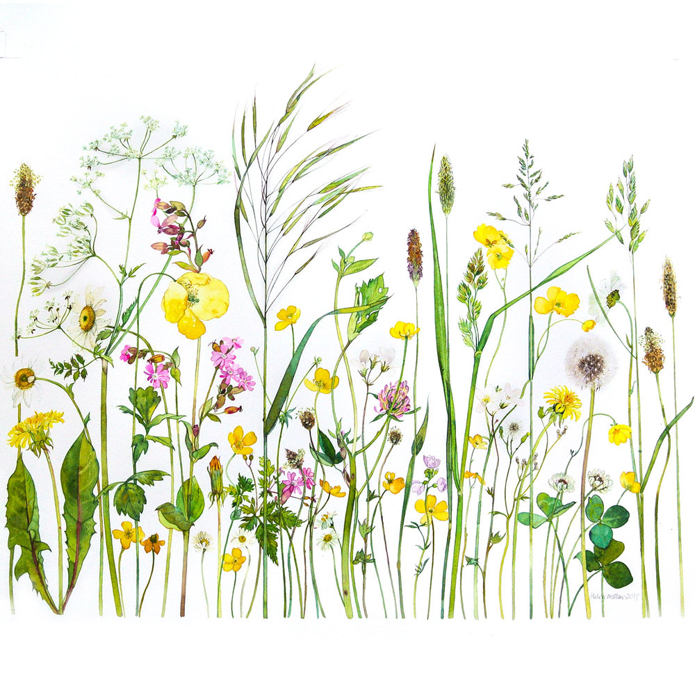 Summer Meadow  watercolour  69 x 61 cm (framed)  SOLD