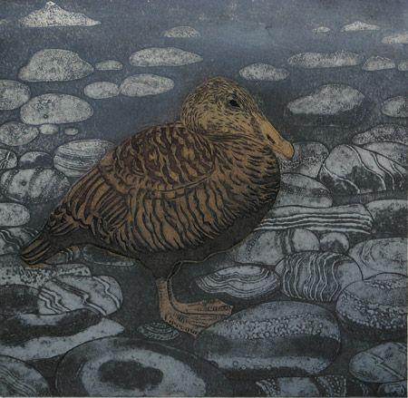 Eider Duck   collagraph   £125