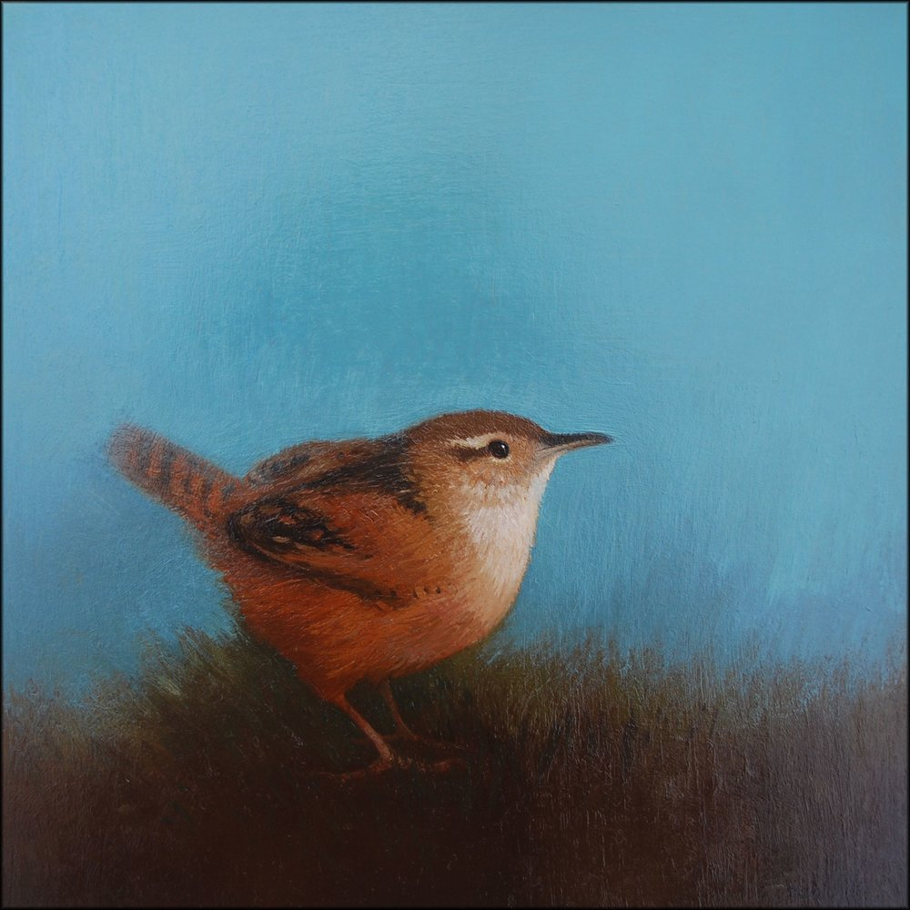Wren III  oil on board  20cm x 20cm  £495