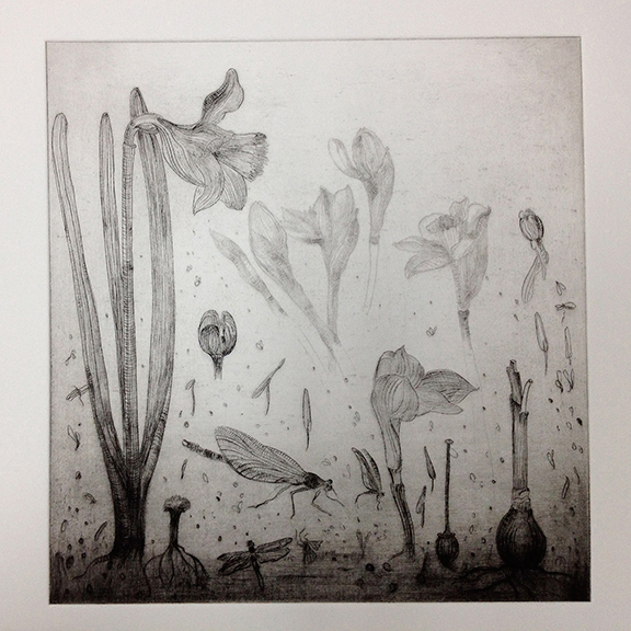 Daffodils and Dragonflies  etching  25cm x 25cm  £275 framed