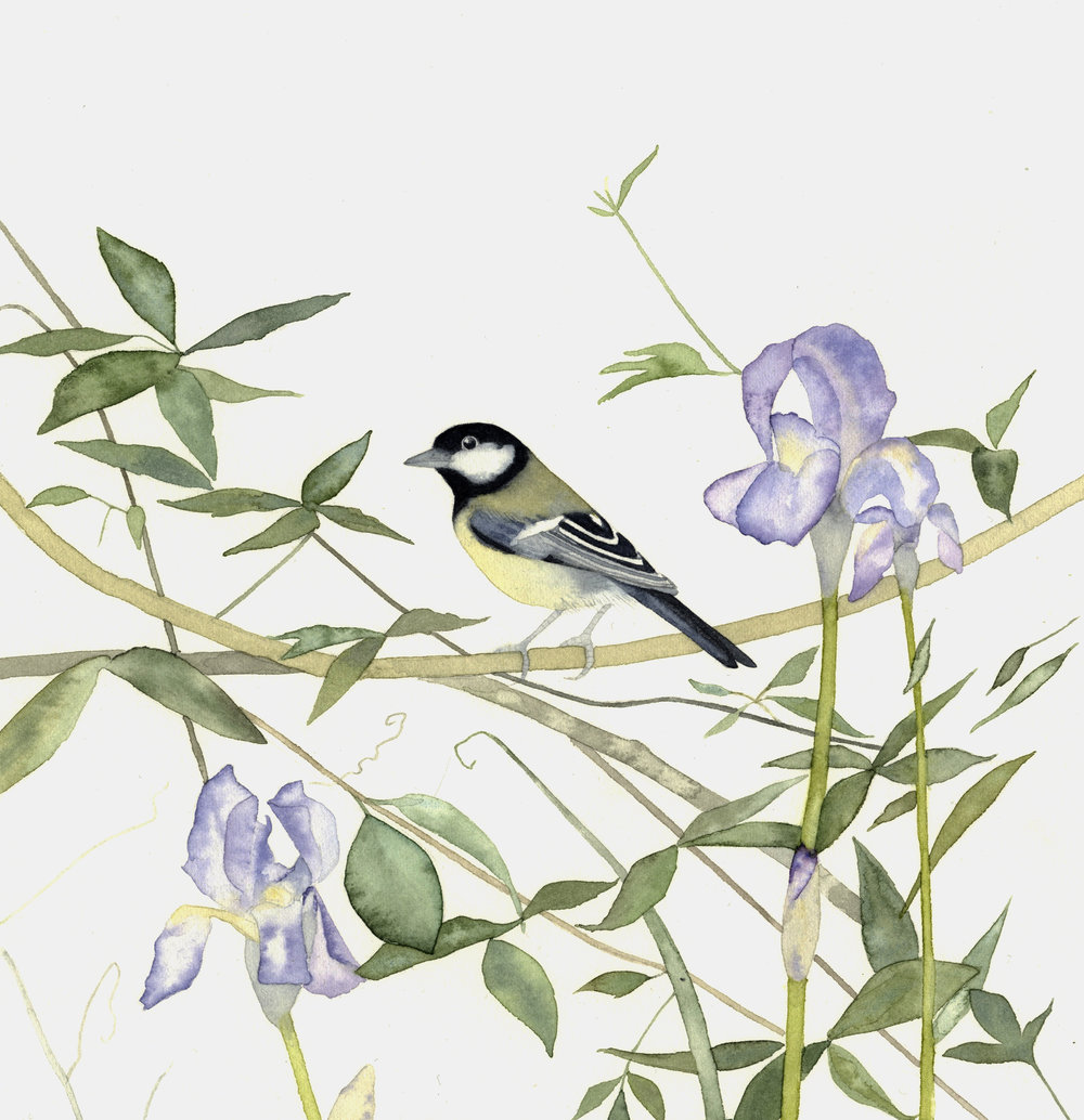 Coal tit and Irises  watercolour  40x40cm framed  £310