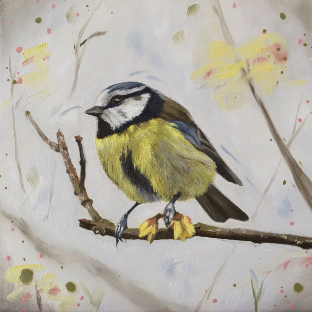 Winter Sweet (Blue Tit)   P ainting  26.5 x 26.5 cm Framed  £195