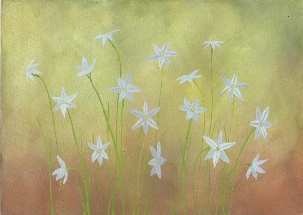 Garden Stars  gouache on paper  50cm x 40cm framed  £150