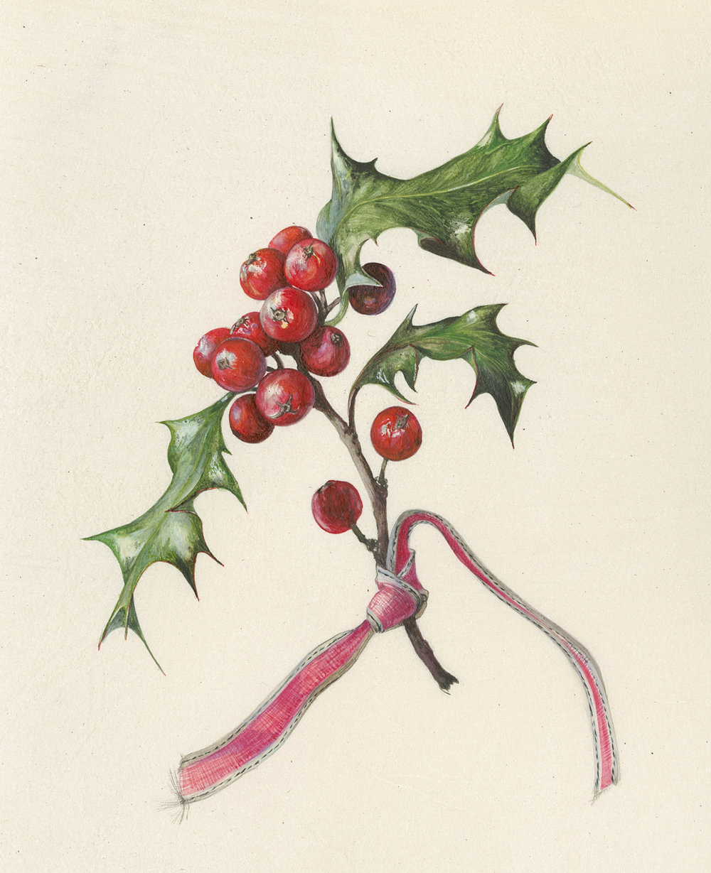Holly and Ribbon  watercolour on vellum  35 x 38 cm framed  SOLD