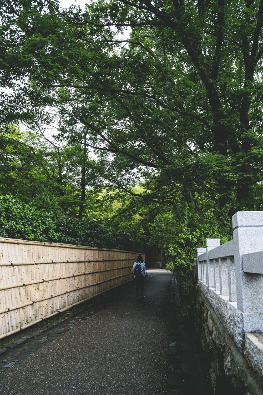 Bamboo Groves 2.jpg
