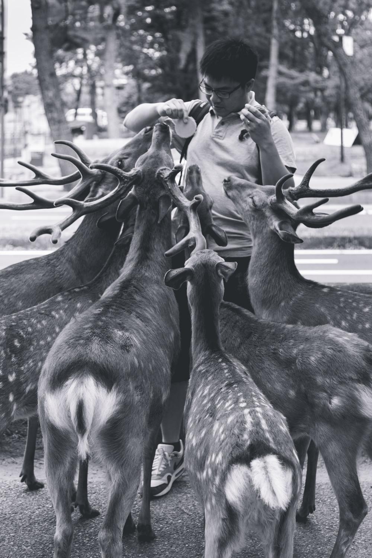 Nara Man.jpg
