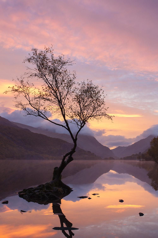 Llyn Padarn Tree.jpg