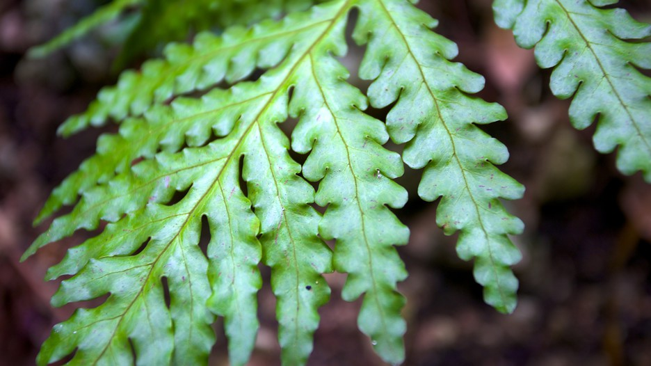 Fern-Gully-60444.jpg