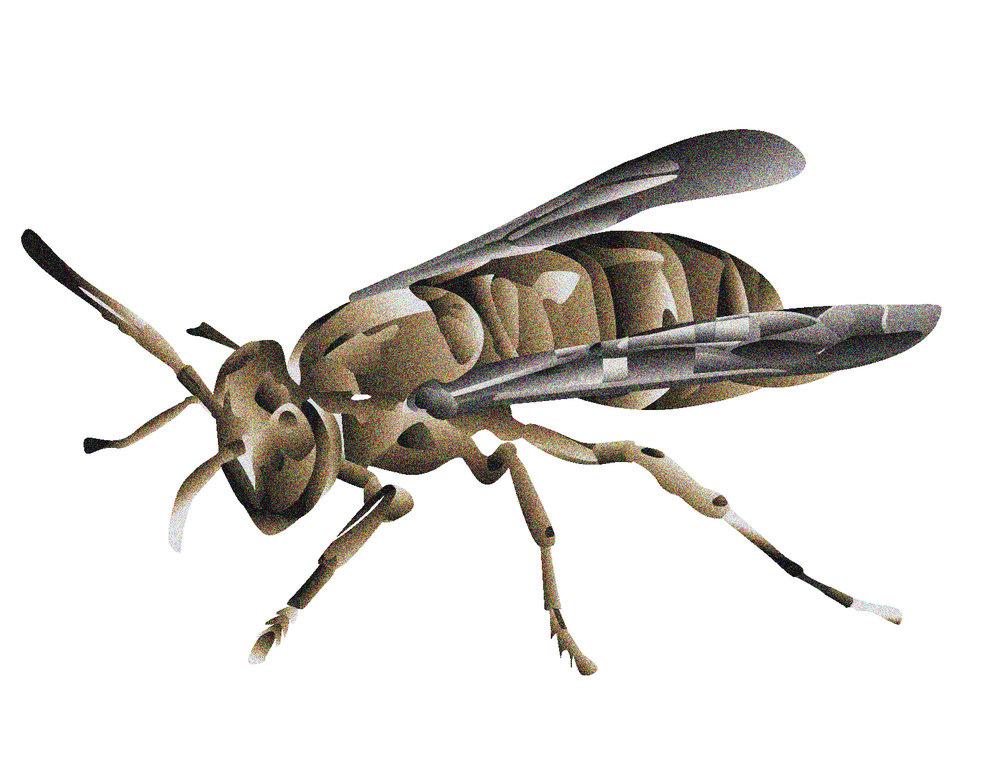 bee-crop.jpg
