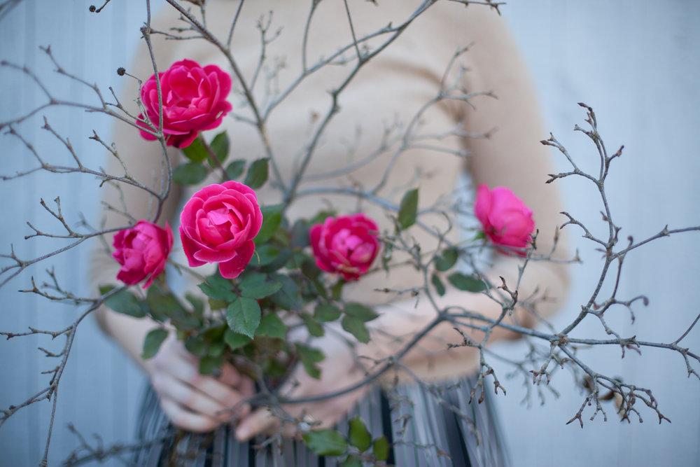 morrice outside rose-2.jpg