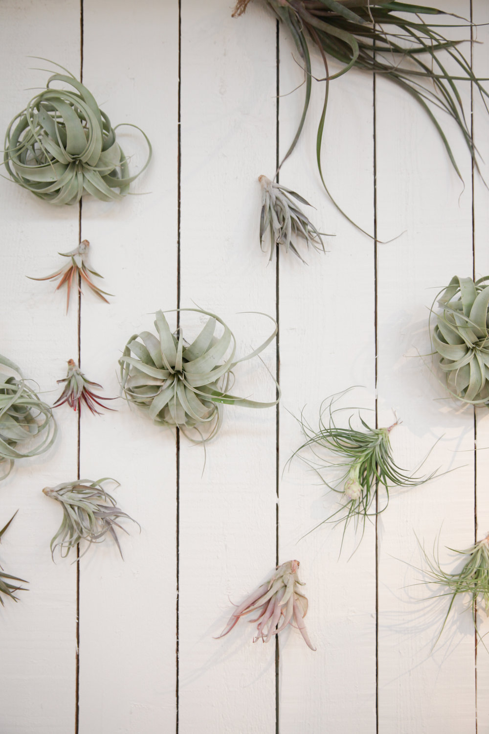 airplant wall.jpg