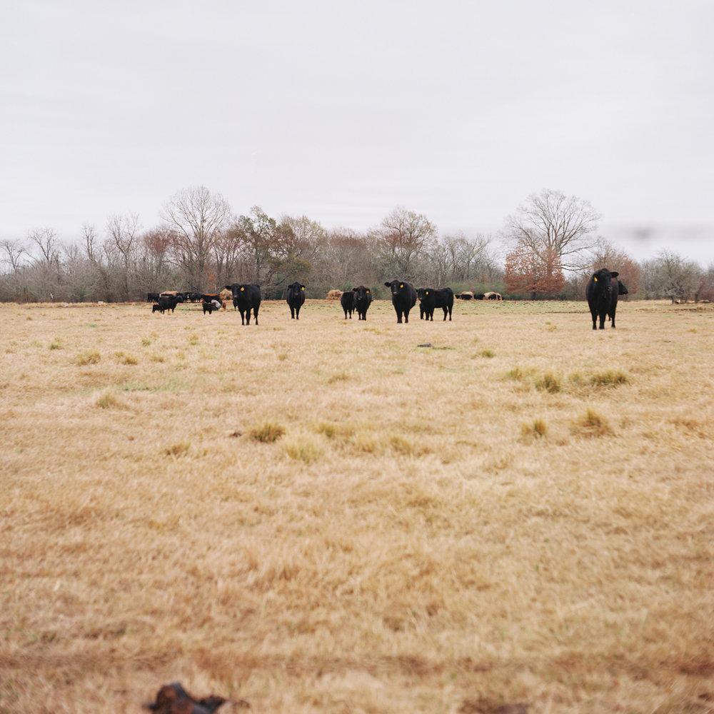 Jack's Farm - 006.jpg