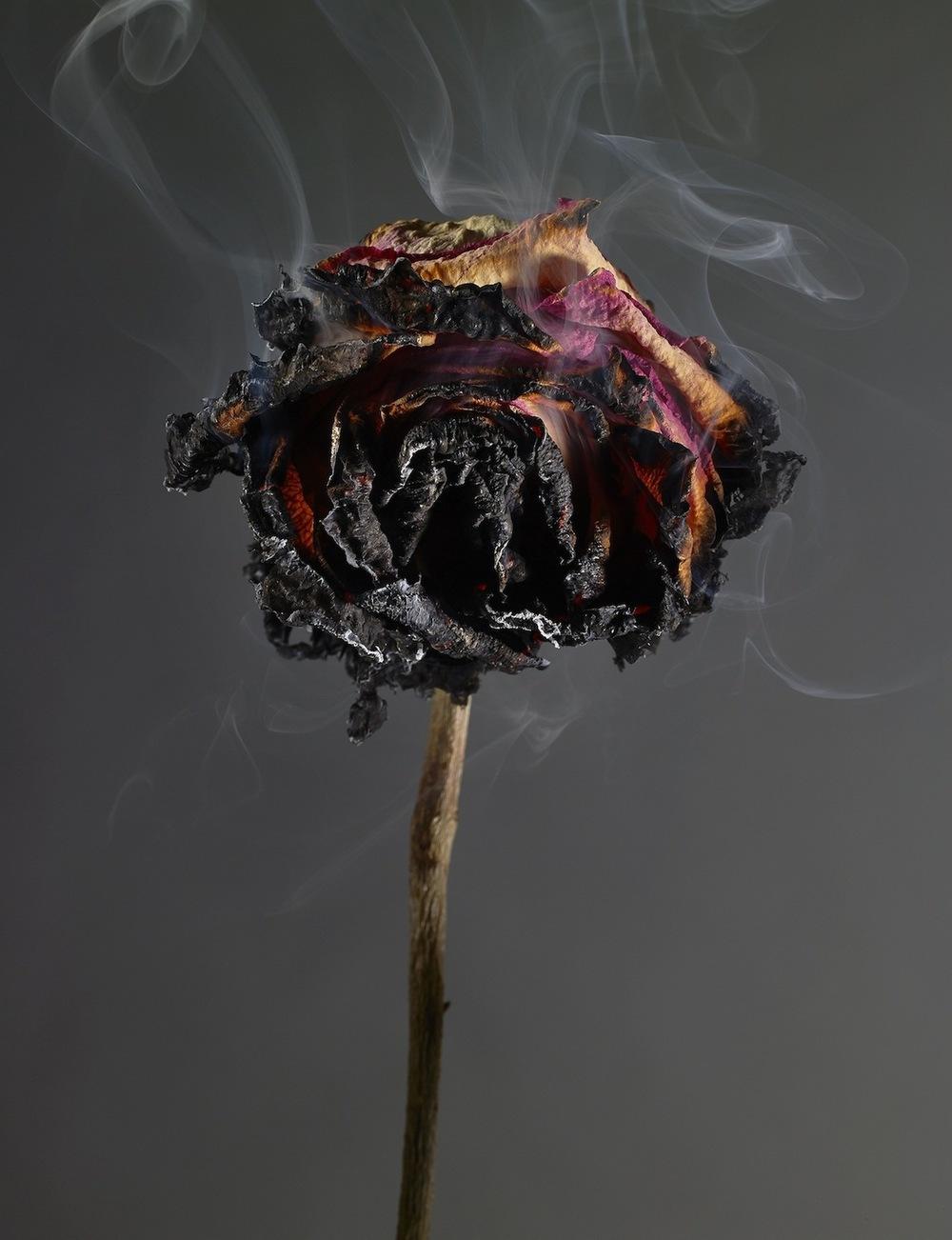 smokey rose.jpg