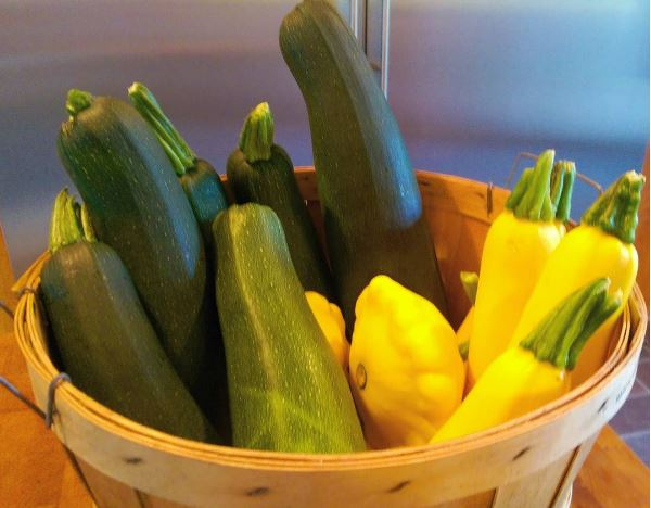 Our garden is producing with abundance! We are happily giving treats to friends and neighbors.