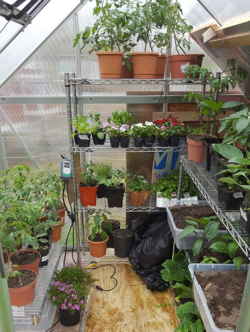 The greenhouse plays a key role in keeping our plants safe and warm in the early season!