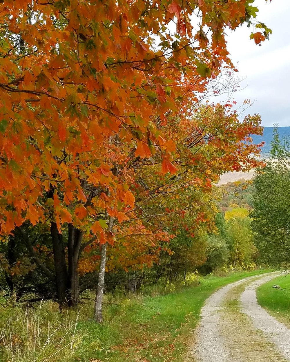 Enjoy a Scenic Drive! - Slow down and enjoy some of the beautiful scenery Vermont has to offer.