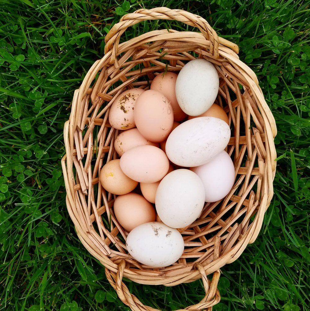Enjoy Farm Fresh Food - We raise our own chickens and ducks so we can provide farm fresh eggs to our guests.