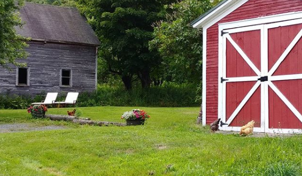 Our friendly little chickens enjoy exploring the property at our Vermont Bed and Breakfast, free-range!