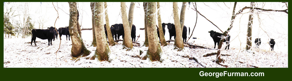 cow trees 4 2048.jpg